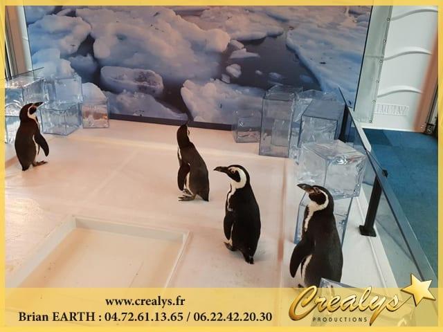 Location Pingouin Manchot Antarctique