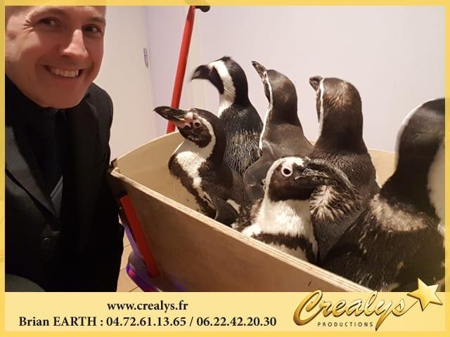 Pédagogie Pingouins et Manchots