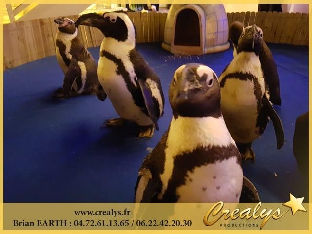 Prestation Manchots Pingouins