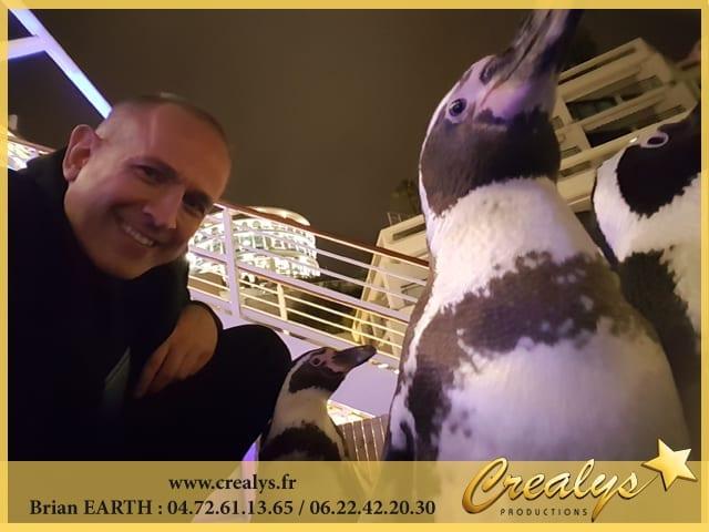 Location pingouin vidéos La Roche sur Yon
