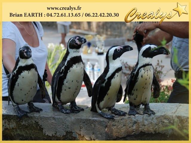 Approcher des manchots et pingouins
