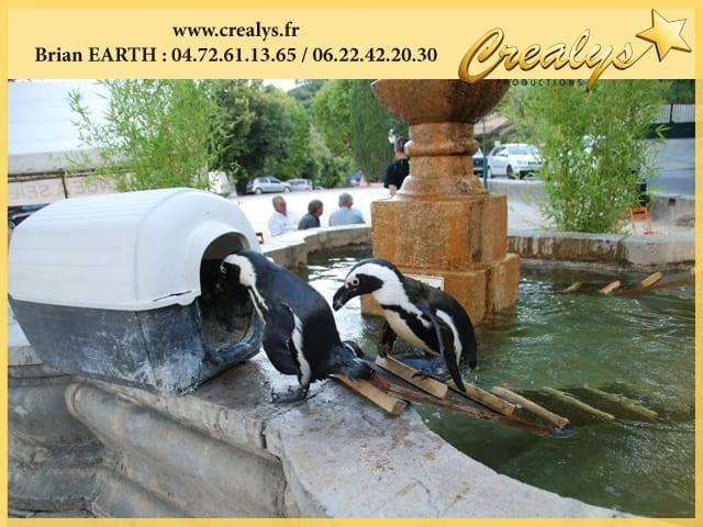 Pingouins & Manchots au bain