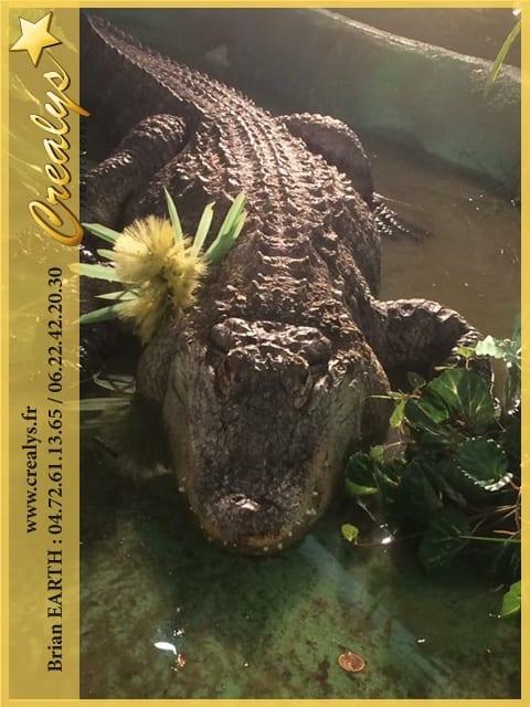 Location alligator vidéos Sarrebourg