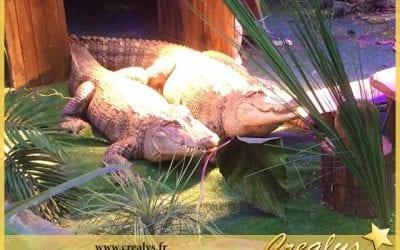 Location alligator vidéos Villeurbanne