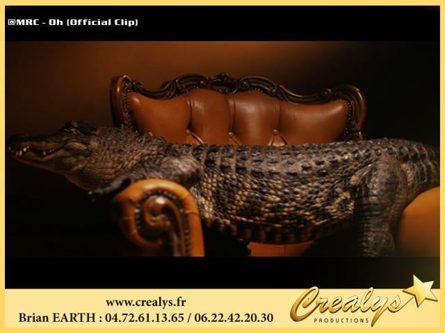 Tournage clips animaux Crocodile MRC
