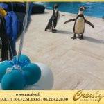 Location pingouin Vidéos Bourg de Péage