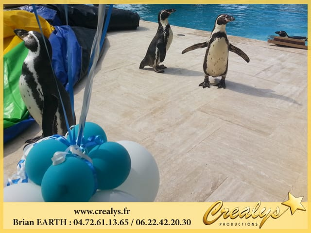 Pingouins Anniversaire Enfants