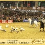 Location cheval Vidéos Nogent sur Marne