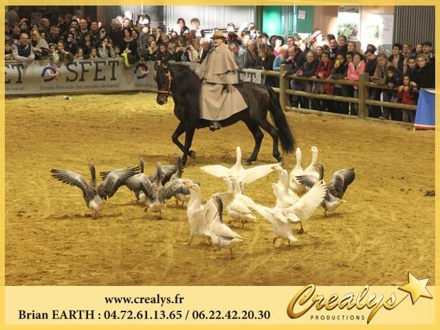 Location cheval vidéos Tours