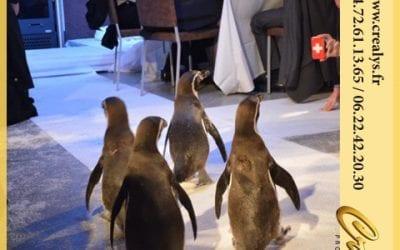 Location pingouin vidéos Cannes