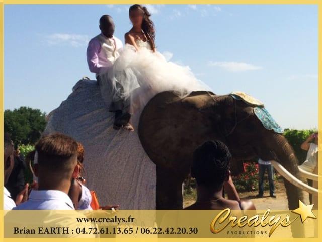 Mariage dos éléphant