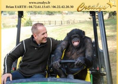 Un Chimpanzé qui conduit