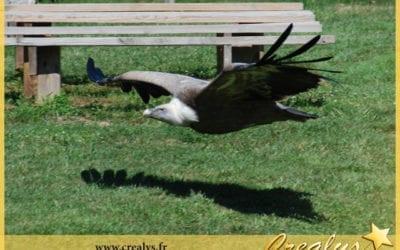 Location aigle vidéos Mauges sur Loire