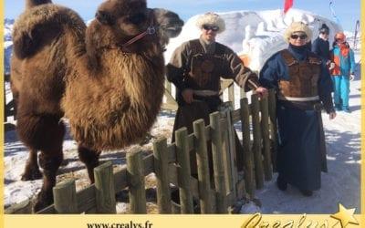 Location chameau vidéos Plouzané