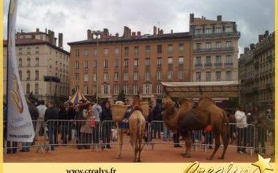 Location chameau vidéos Lille