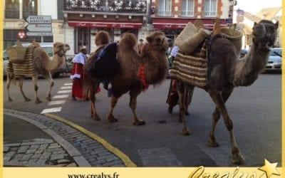 Location chameau vidéos Saint Brieuc