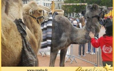 Location chameau vidéos Saint Hilaire de Riez