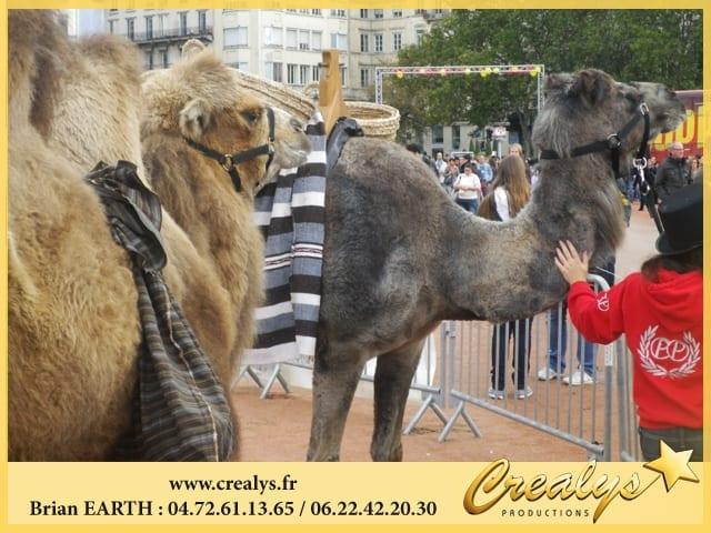 Location chameau vidéos Andernos les Bains