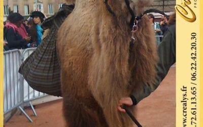Location chameau vidéos Laxou