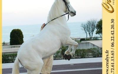 Location cheval vidéos Montrevault sur Èvre