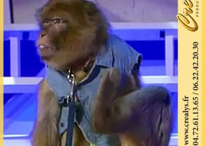 Singe Macaque ou Magot A2