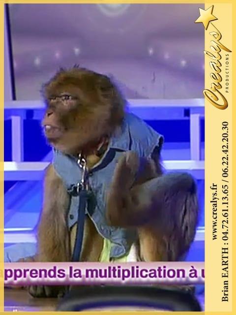 Location singe macaque vidéos La Madeleine