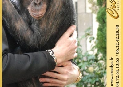 Ti Chimpanzé veut son calin