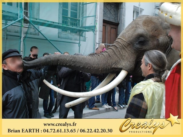 Approcher un éléphant