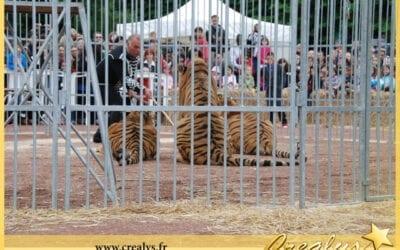 Location tigre vidéos Paris 13e  Arrondissement