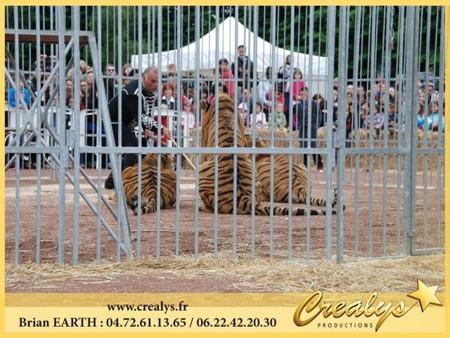 Location tigre vidéos Beauvais