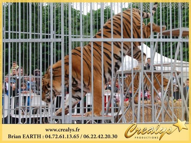 Location Tigres Saut