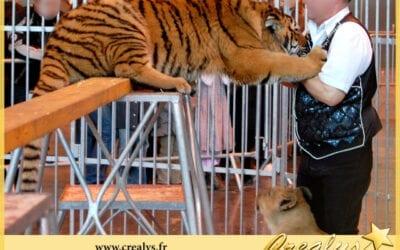 Location tigre vidéos Canteleu