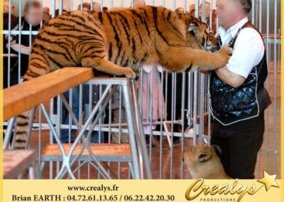 Tigre en démonstration