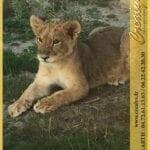 Location lion Vidéos Porto Vecchio
