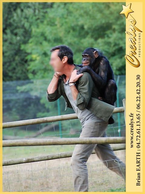 TF1 Chimpanzé Victor Sauvage