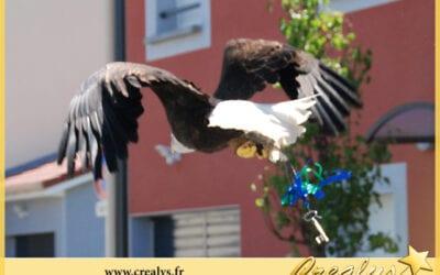 Location aigle vidéos Andrésy