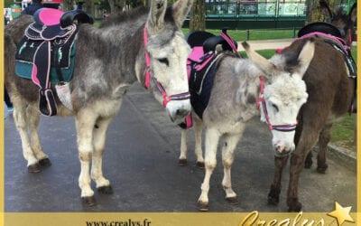 Location ane poney vidéos Méricourt