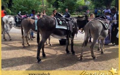 Location ane poney vidéos Chambray lès Tours