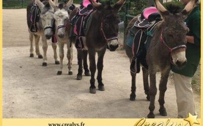 Location ane poney vidéos Cherbourg en Cotentin