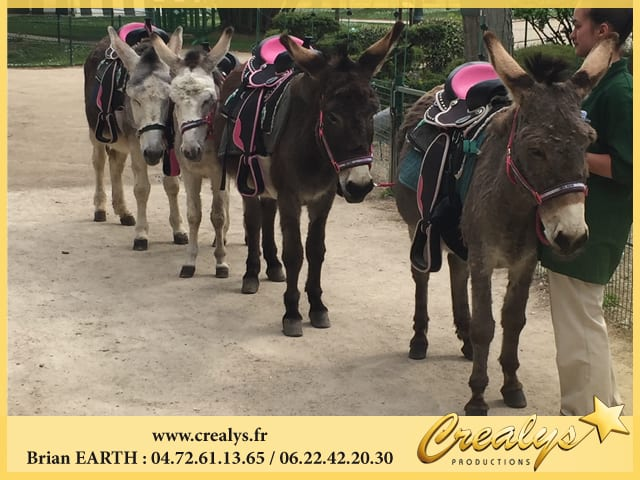 Location anes poneys