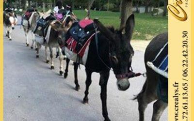 Location ane poney vidéos Villepreux