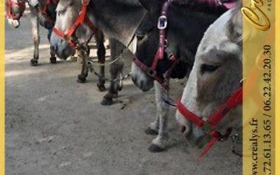 Location ane poney vidéos Sartrouville