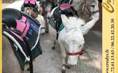Location ane poney vidéos Castelsarrasin
