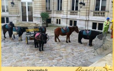 Location ane poney vidéos Orléans