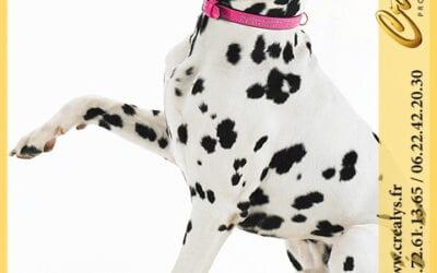 Location chien vidéos Bagneux
