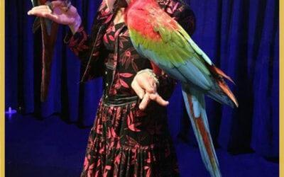 Location perroquet vidéos Montbrison